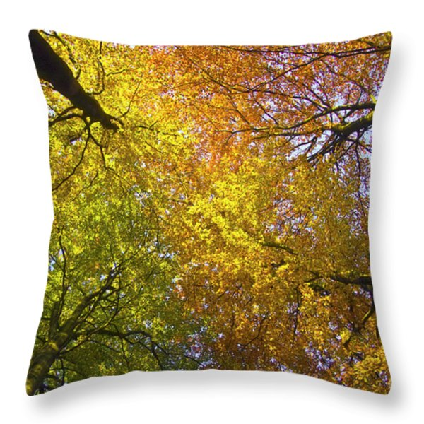 View To The Top Of Beech Trees Throw Pillow by Heiko Koehrer-Wagner