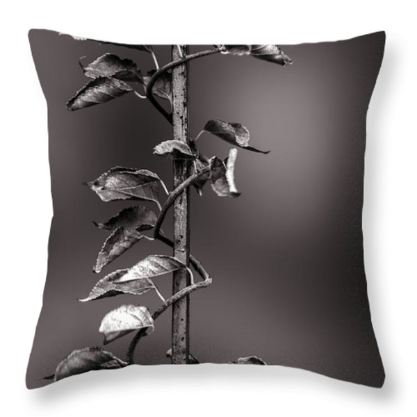 Vine on Iron Throw Pillow by Bob Orsillo