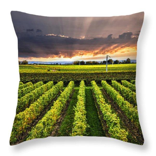 Vineyard at sunset Throw Pillow by Elena Elisseeva