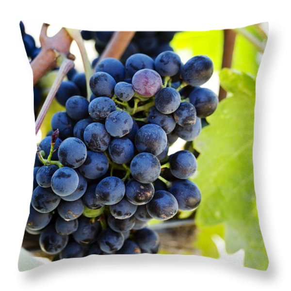 Vineyard Grapes Throw Pillow by Charmian Vistaunet