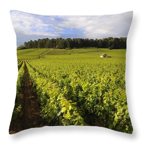 Vineyard near Monthelie. Burgundy. France. Europe Throw Pillow by BERNARD JAUBERT
