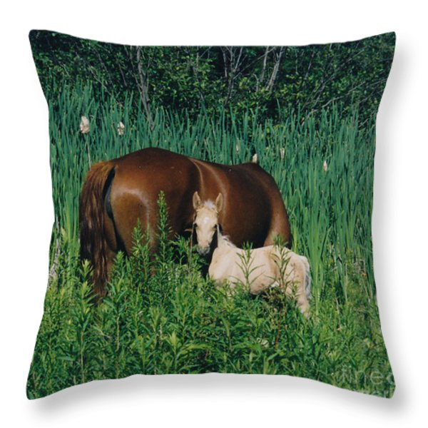 Viva Zapata Contratercero And Her Dam Calista Throw Pillow by Patricia Keller