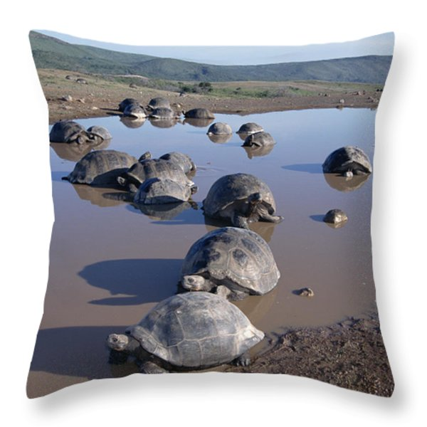 Volcan Alcedo Giant Tortoise Wallowing Throw Pillow by Tui De Roy