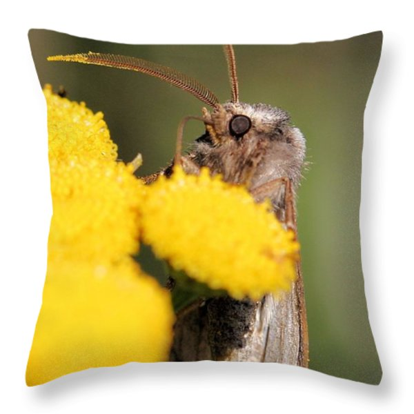 Voluble Dart Moth Throw Pillow by Doris Potter