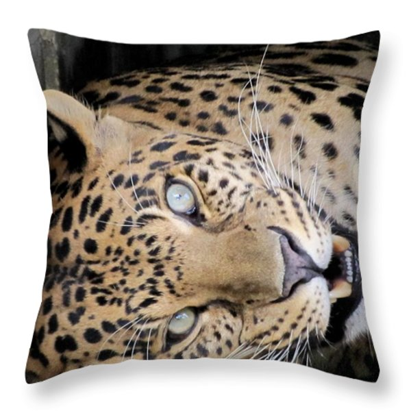 Voodoo The Leopard Throw Pillow by Keith Stokes