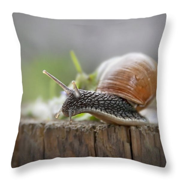 Voyage Of Discovery Throw Pillow by Evelina Kremsdorf