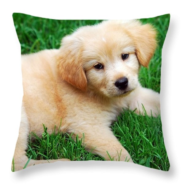 Warm Fuzzy Puppy Throw Pillow by Christina Rollo
