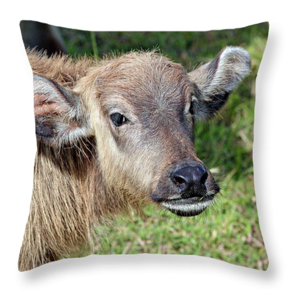 Water buffalo Throw Pillow by Paul Fell