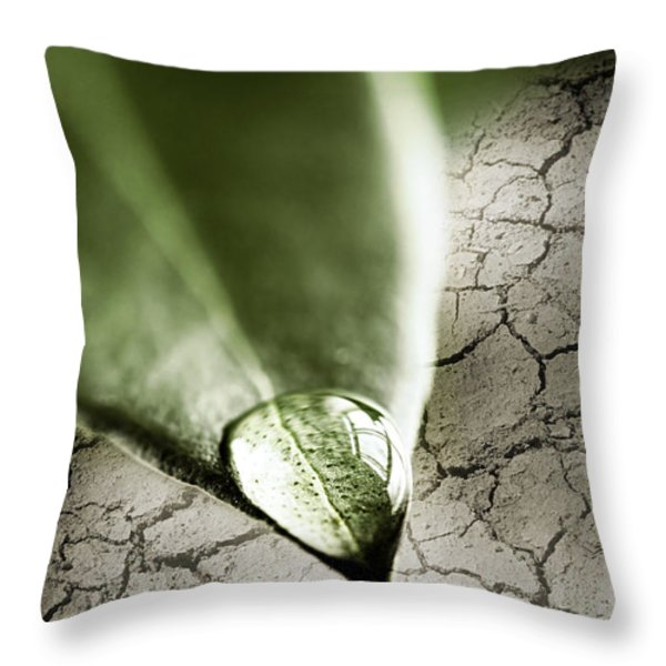 Water drop on green leaf Throw Pillow by Elena Elisseeva