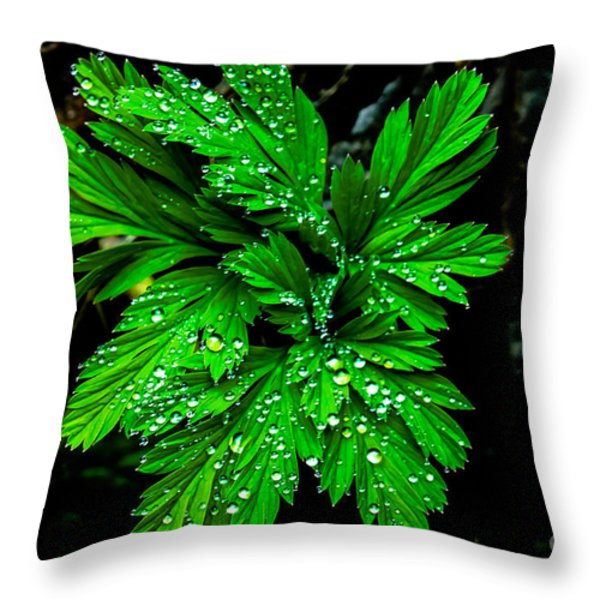 Water Drops Throw Pillow by Robert Bales