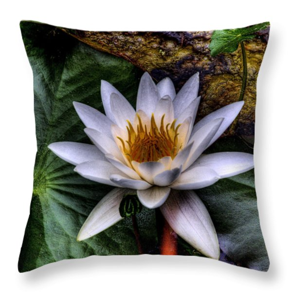 Water Lily Throw Pillow by David Patterson