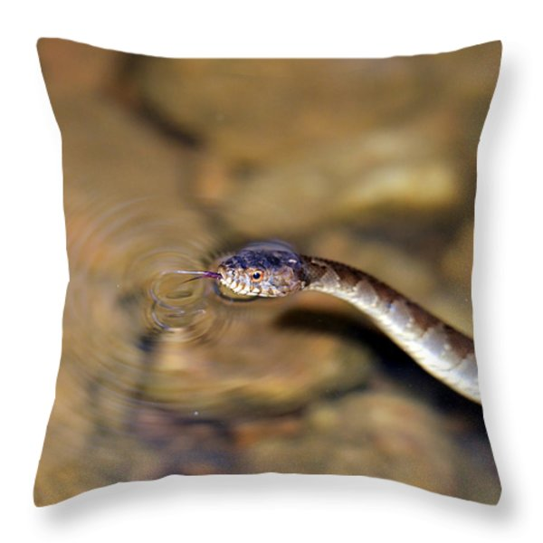 Water Snake Throw Pillow by Susan Leggett