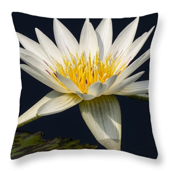 Waterlily and Pad Throw Pillow by Susan Candelario