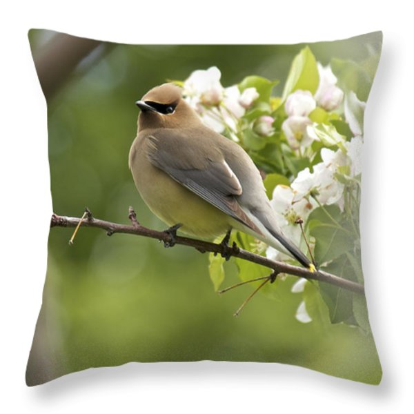 Waxwing In A Dream Throw Pillow by Penny Meyers