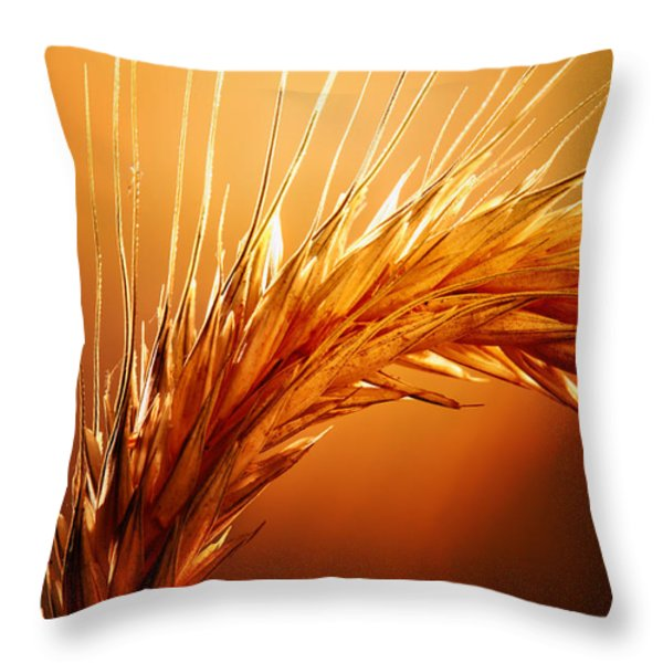 Wheat Close-up Throw Pillow by Johan Swanepoel