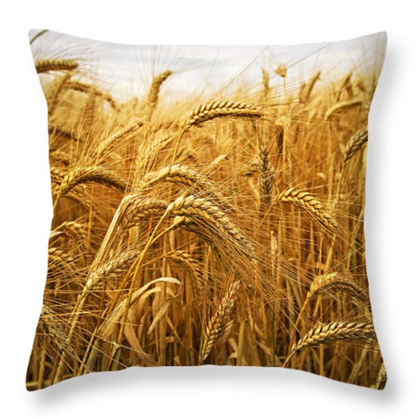 Wheat Throw Pillow by Elena Elisseeva
