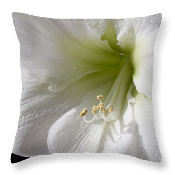 White Amaryllis Throw Pillow by Adam Romanowicz