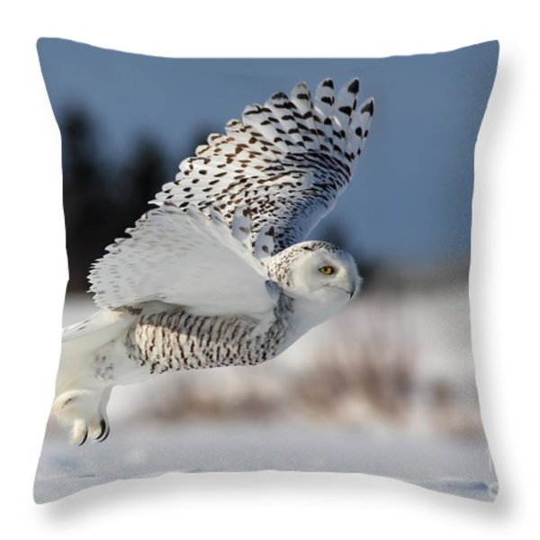 White angel - Snowy owl in flight Throw Pillow by Mircea Costina Photography