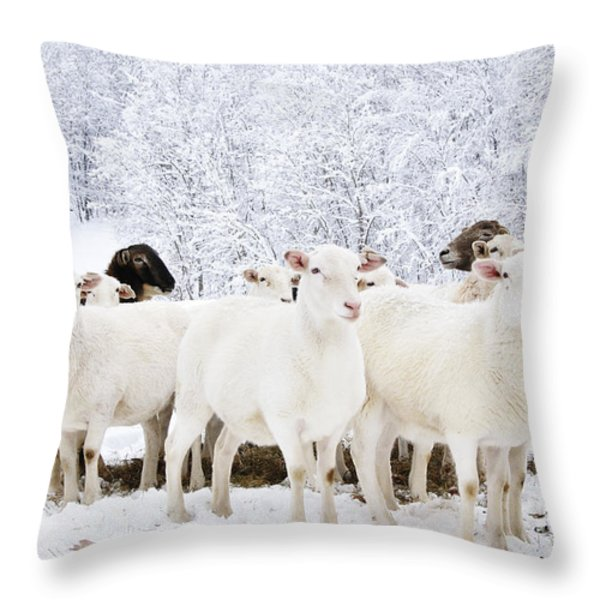 White As Snow Throw Pillow by Thomas R Fletcher