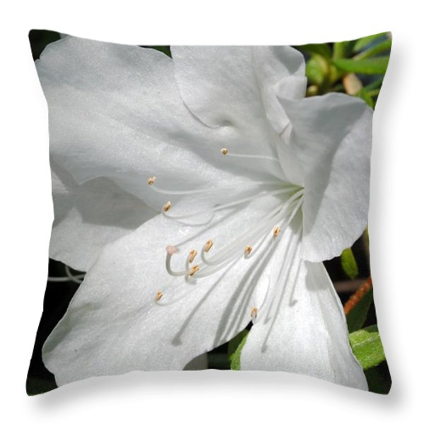 White Azalea Throw Pillow by Kelly Nowak