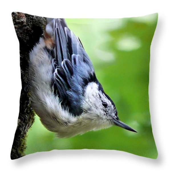 White-breasted Nuthatch Throw Pillow by Christina Rollo
