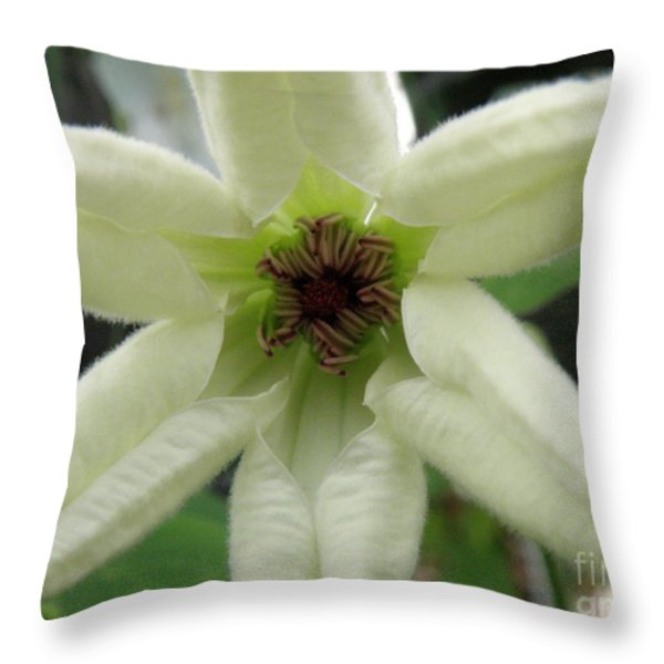 White Clematis Throw Pillow by Lainie Wrightson