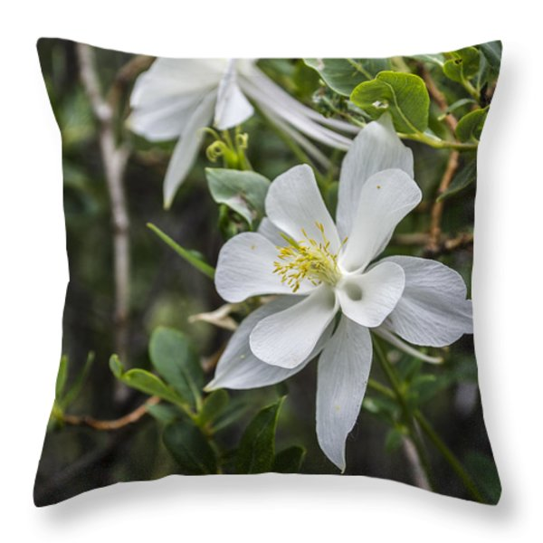 White Columbine Throw Pillow by Aaron Spong