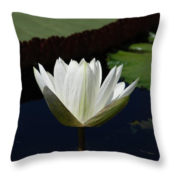 White Flower Growing Out Of Lily Pond Throw Pillow by Jennifer Lyon