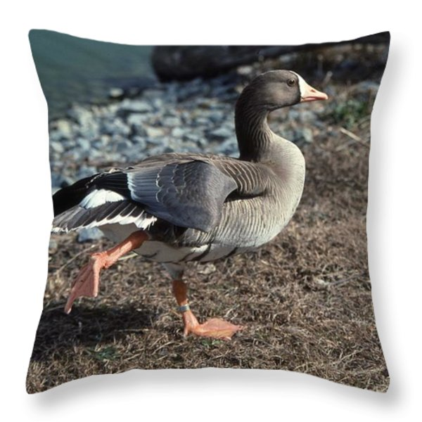 WHITE FRONTED GOOSE Throw Pillow by Skip Willits