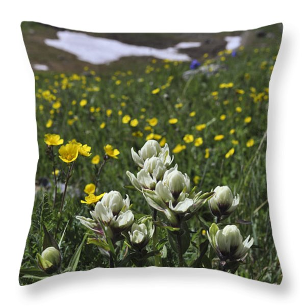 White Indian Paintbrushes Throw Pillow by Aaron Spong