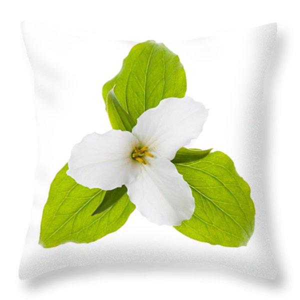White Trillium flower  Throw Pillow by Elena Elisseeva