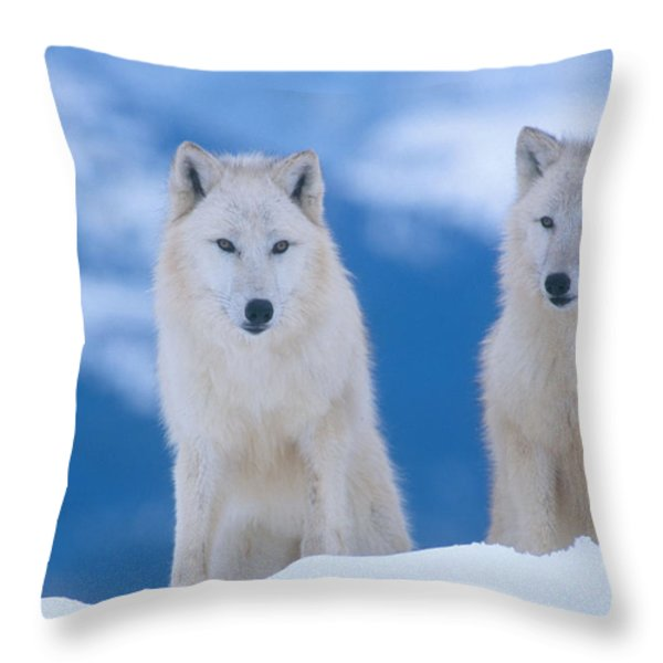 White Wolf Pair In Winter Throw Pillow by Alan and Sandy Carey