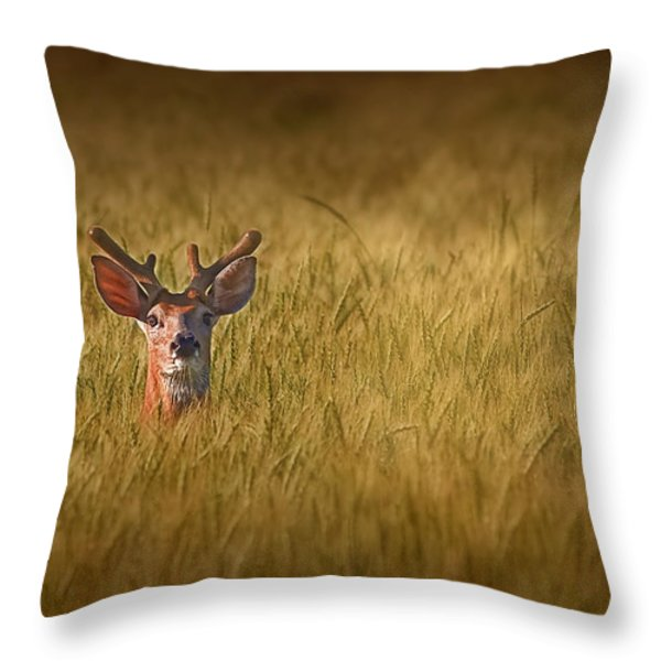 Whitetail Deer In Wheat Field Throw Pillow by Tom Mc Nemar
