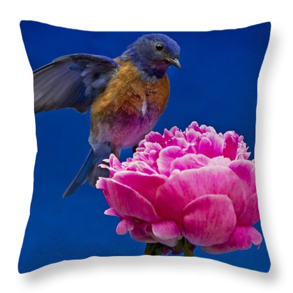Whoaa Throw Pillow by Jean Noren