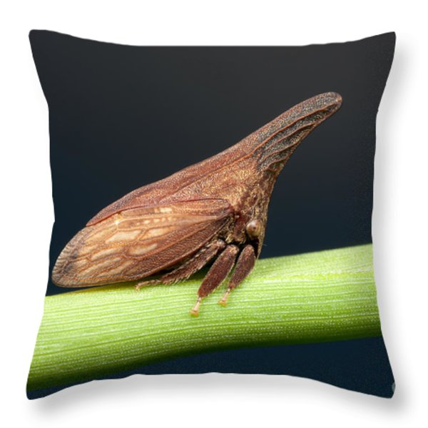 Widefooted Treehopper II Throw Pillow by Clarence Holmes