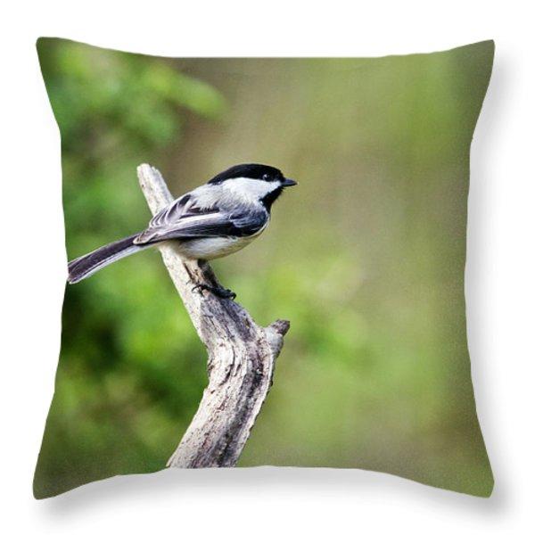 Wild Birds - Black Capped Chickadee Throw Pillow by Christina Rollo