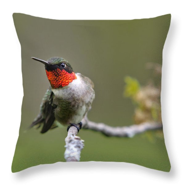 Wild Birds - Ruby-throated Hummingbird Throw Pillow by Christina Rollo