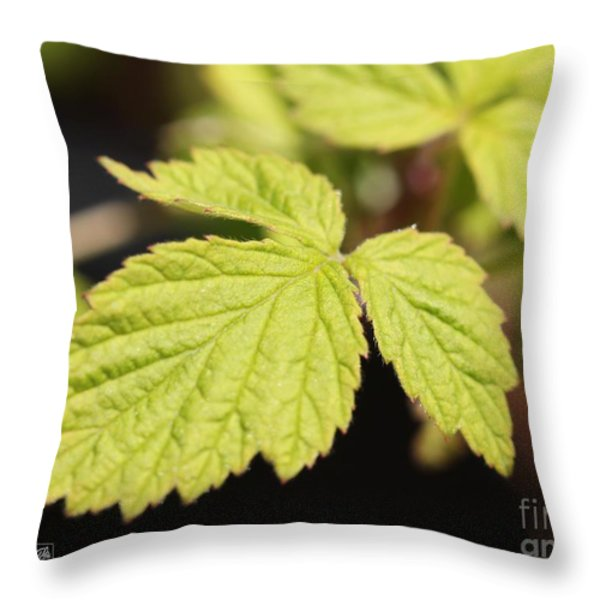 Wild Black Raspberry Leaves Throw Pillow by J McCombie