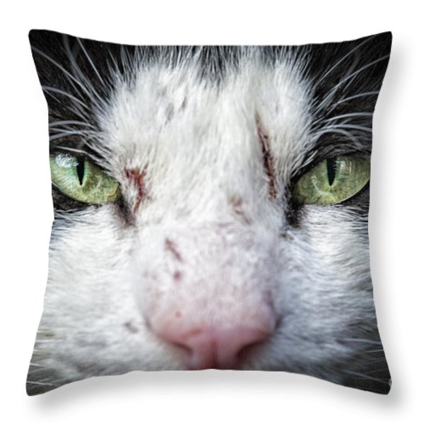 Wild Cat Throw Pillow by Julian Eales