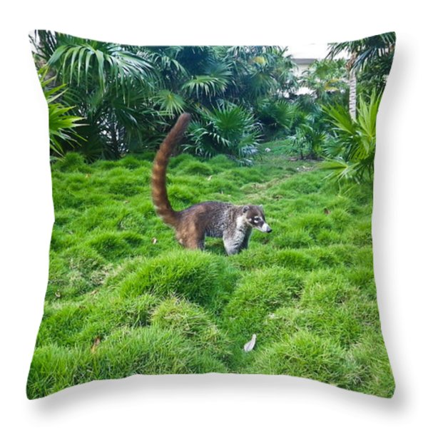 Wild Coati Throw Pillow by Eti Reid