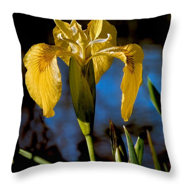 Wild Iris Throw Pillow by Robert Bales