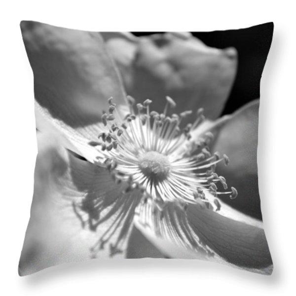 Wild Rose Throw Pillow by Kelly Nowak