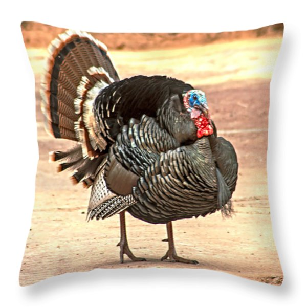 Wild Tom Turkey Throw Pillow by Robert Bales