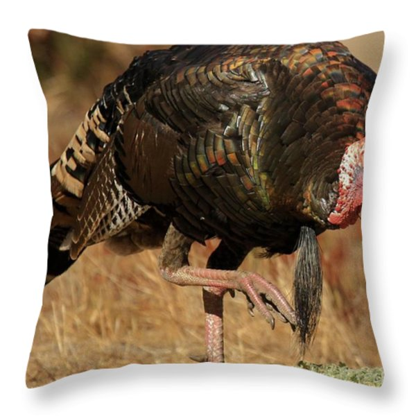 Wild Turkey Throw Pillow by Adam Jewell
