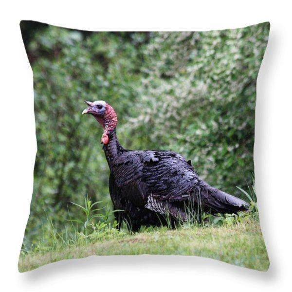 Wild Turkey Throw Pillow by Karol  Livote