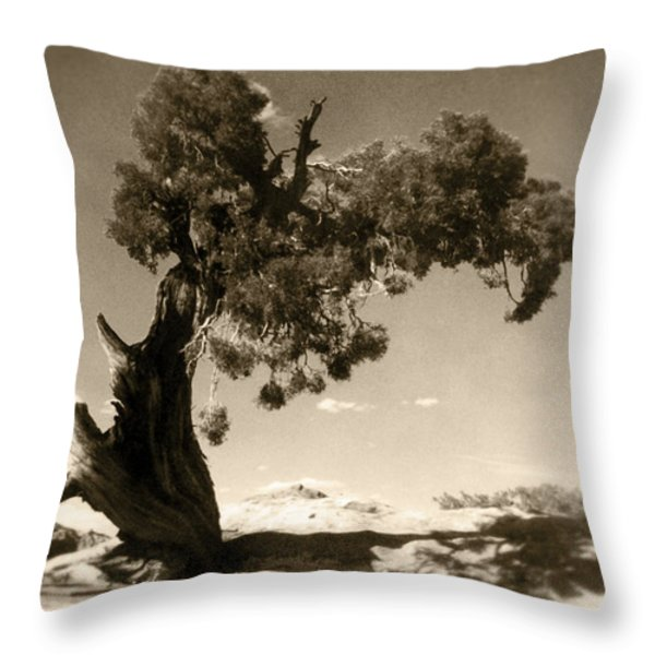 Wind Swept Tree Throw Pillow by Scott Norris