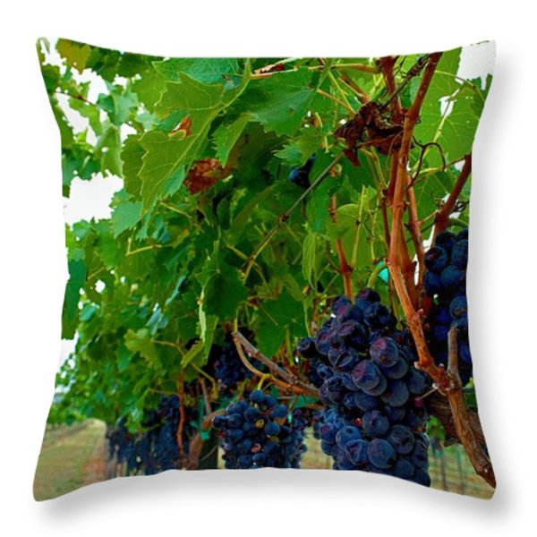 Wine Grapes on the Vine Throw Pillow by Kristina Deane