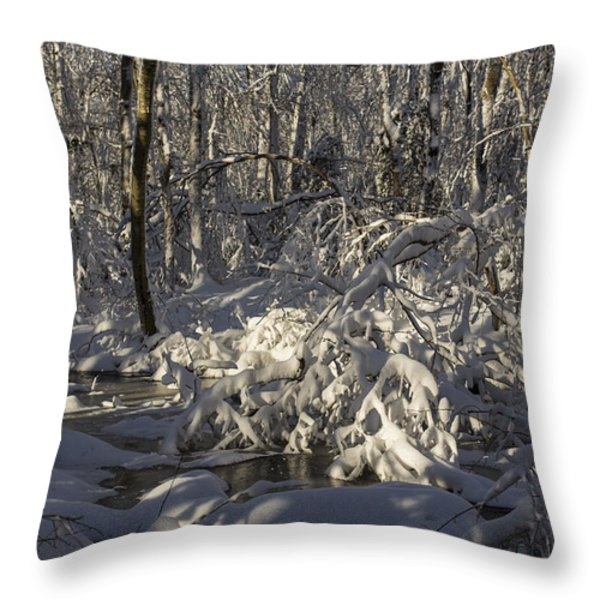 Winter at Borden Brook Throw Pillow by Andrew Pacheco