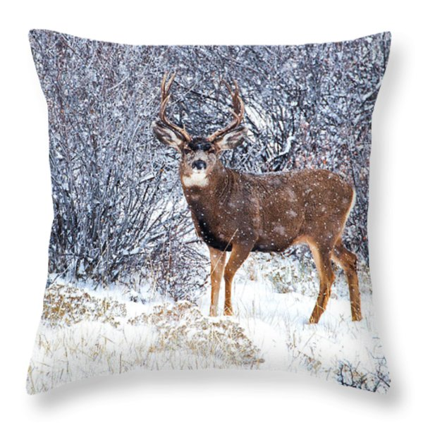 Winter Buck Throw Pillow by Darren  White