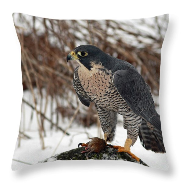 Winter Hunt Peregrine Falcon In The Snow Throw Pillow by Inspired Nature Photography Fine Art Photography